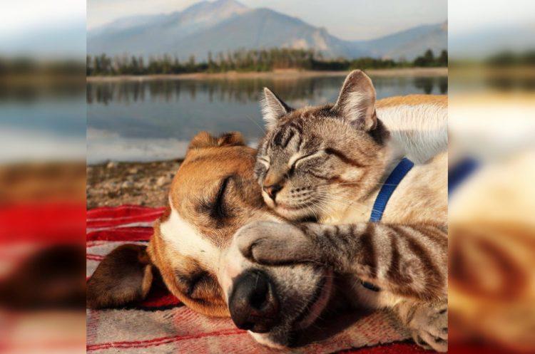 40 кошек и собак, которые, кажется, втрескались друг в друга по уши