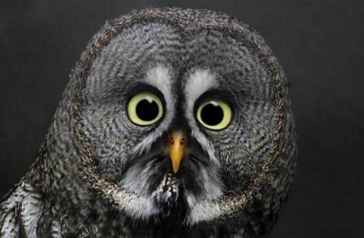 30 оттенков удивления в мире животных