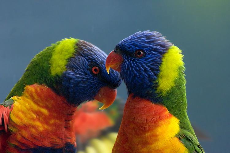 Самые красивые птицы на Земле: 30 фото