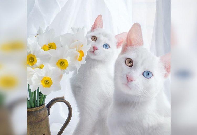 животные-близнецы