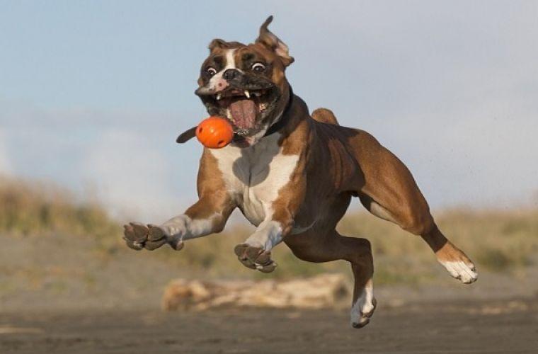 Забавные фото животных, сделанные в нужный момент