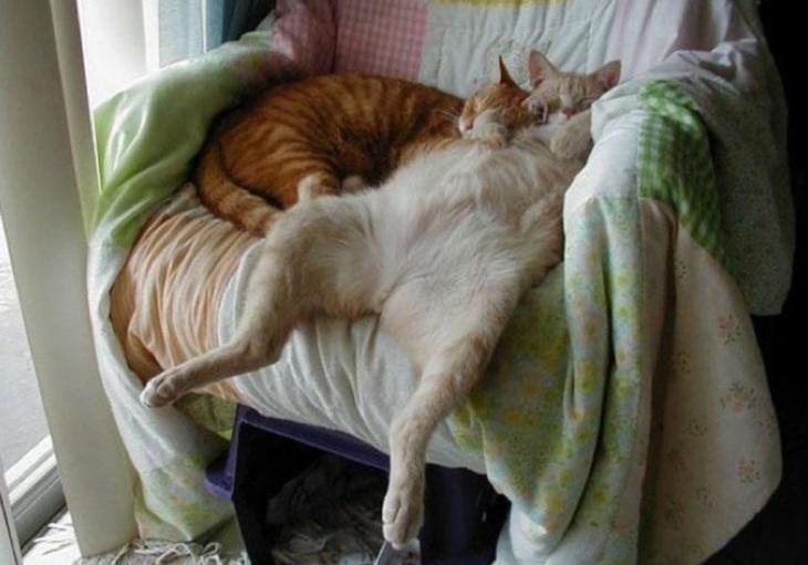 """""""Мастера релакса"""": 35 кошек, которые научат вас правильно расслабляться"""