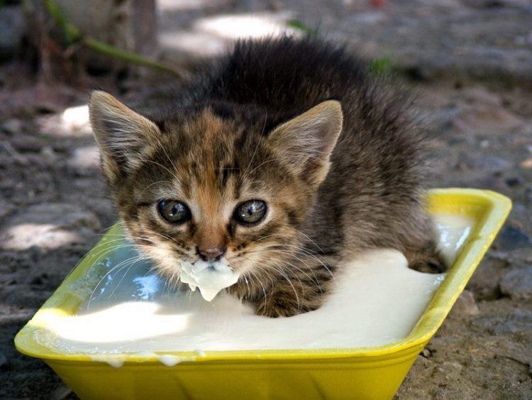 Котенок ест картинка
