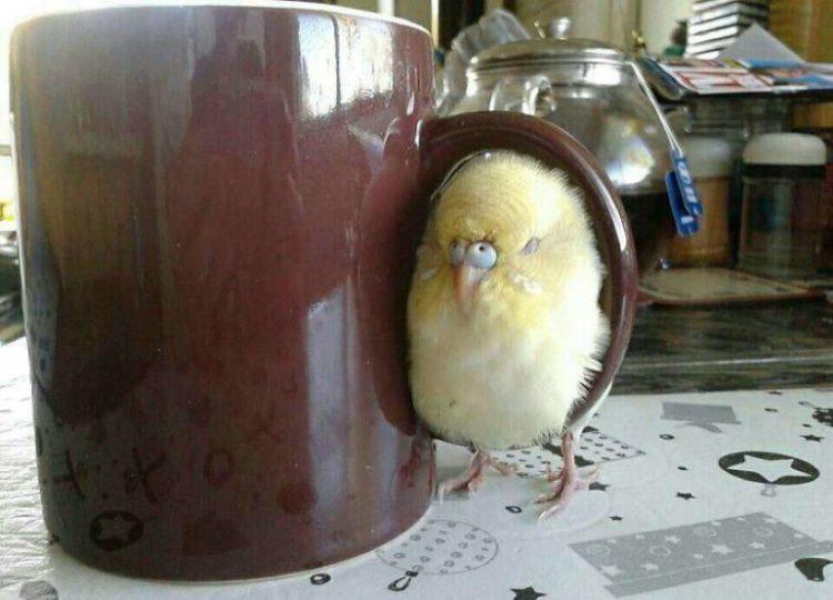 35 смешных и прикольных фотографий птиц