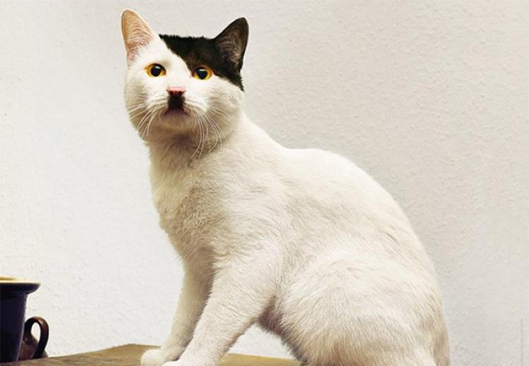 100 самых смешных фотографий кошек