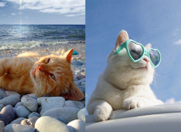 Картинка с надписью кот в отпуске я за него