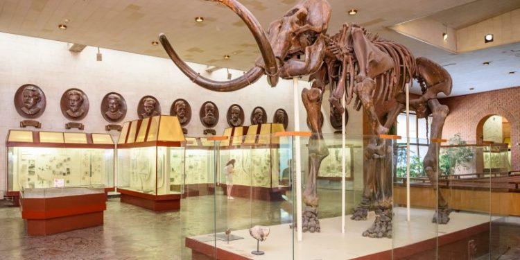 Самые причудливые музеи мира