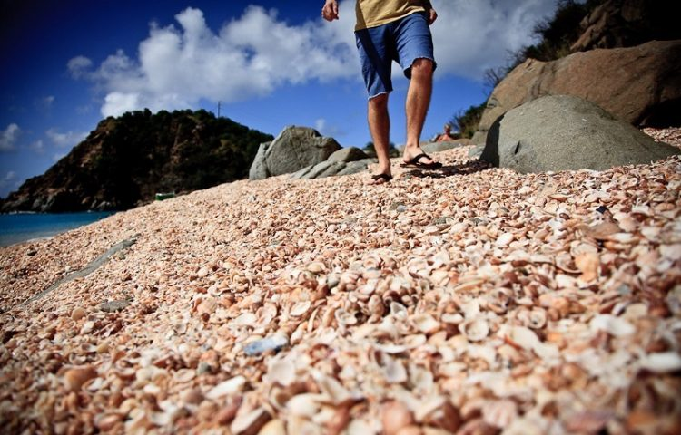 shell beach south africa