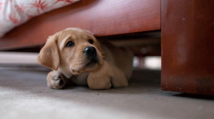 40 собак, которые думают, что они умеют играть в прятки